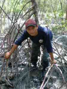 Petualang di hutan mangrove