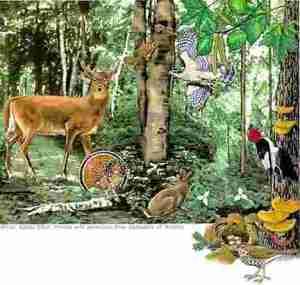 Hutan dan Penghuninya
