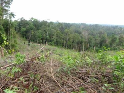 Kerusakan hutan akibat ulah manusia