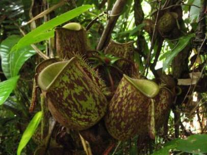 Biodiversity Indonesia